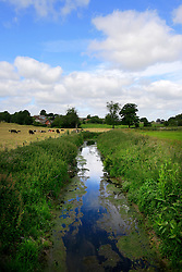 UK ENGLAND WILTSHIRE 26JUN08 - The river Kennet near Avesbury in rural Wiltshire, western England...jre/Photo by Jiri Rezac / WWF UK..© Jiri Rezac 2008..Contact: +44 (0) 7050 110 417.Mobile:  +44 (0) 7801 337 683.Office:  +44 (0) 20 8968 9635..Email:   jiri@jirirezac.com.Web:     www.jirirezac.com..© All images Jiri Rezac 2008 - All rights reserved.
