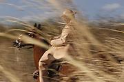 Nova Olinda_CE, Brasil.<br /> <br /> Vaqueiro vestido com trajes de couro em Nova Olinda, Ceara.<br /> <br /> Cowboy dressed in leather in Nova Olinda, Ceara.<br /> <br /> Foto: LEO DRUMOND / NITRO