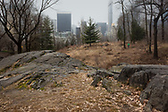 The Dene native meadow in Central Park with a misty Mid-Manhattan skyline.