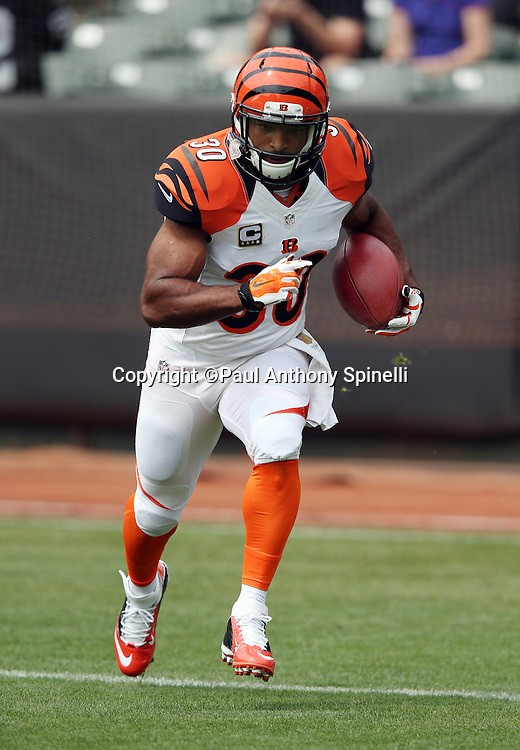 Cincinnati Bengals running back Cedric Peerman (30) returns a punt while warming up before the 2015 NFL week 1 regular season football game against the Oakland Raiders on Sunday, Sept. 13, 2015 in Oakland, Calif. The Bengals won the game 33-13. (©Paul Anthony Spinelli)