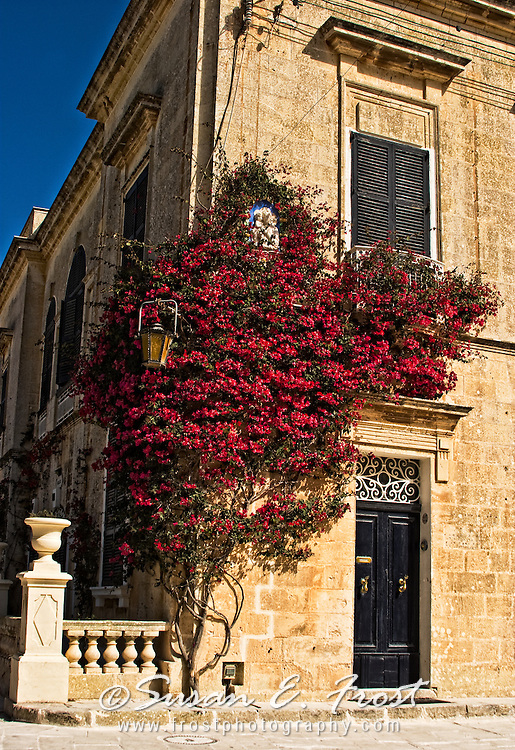 Bouganvilla on building in Malta.