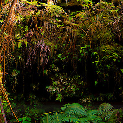 Tropical Foliage near Entrance to Thurston Lava Tube,  Hawai'i Volcanoes National Park, Big Island, Hawaii, US
