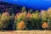 Colorful fall trees at the base of Mt. Washington New Hampshire.