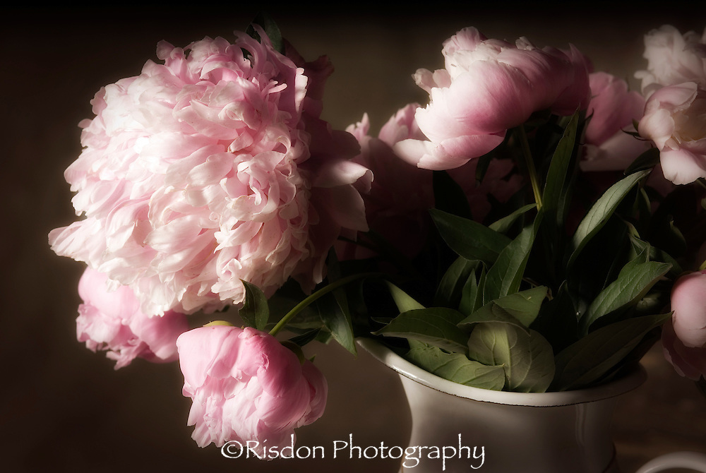 Macro photography of pink peony in metal vase