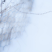 Where: Canada, Winter fence. I love the cold feel to the image.