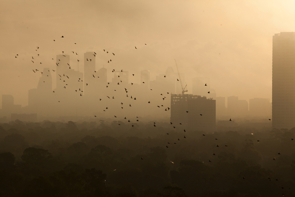 Faint silhouette of Houston, Texas skyline through dense fog with flock of birds above tree tops in foreground at dusk.