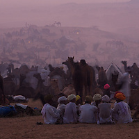 Dusk at the Camel fair in Pushkar, Rajasthan, India.