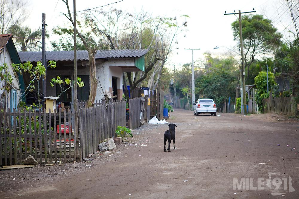 A stray dog on the street, Brazil.