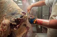 Rindfleisch am Schlachtband in Norddeutschland. 14. 01. 2011