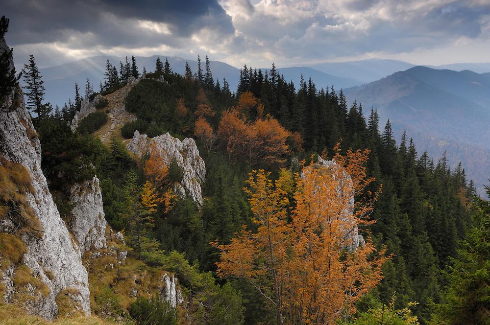 "Rocky limestone area ""La Zaplaz"", National Park Piatra Craiului, Transylvania, Southern Carpathians, Romania"