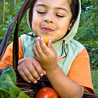 A young gardener enjoys a cherry tomato, freshly harvested from his family's garden.