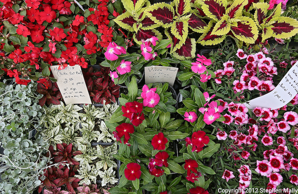 Flowers for sale at the Downtown Farmers' Market in Cedar Rapids on Saturday morning, June 2, 2012. There were 244 vendors who participated in the first market of the year. (Stephen Mally/Freelance)