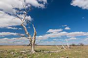 Sandhills, Nebraska, grasslands, Loup County, prairie