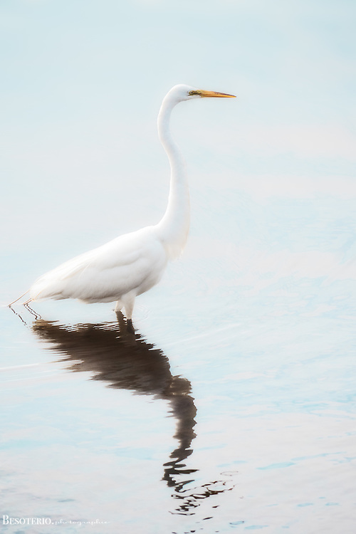 A white crane on the bay. <br />