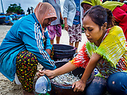 03 AUGUST 2017 - KUTA, BALI, INDONESIA: Women sort fish caught overnight by villagers who live along Jimbrana Beach in Kuta. The beach is close to the airport and a short drive from other beaches in southeast Bali. Jimbrana was originally a fishing village with a busy local market. About 25 years ago, developers started building restaurants and hotels along the beach and land prices are rising. The new emphasis on tourism is changing the nature of the area but the fishermen are still busy very early in the morning.     PHOTO BY JACK KURTZ