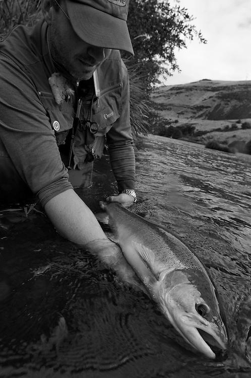 A fisherman holds a steelhead on the Deschutes River.