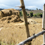 A stack of trashed rice stems in a field on the way to Site 3 of the Plain of Jars in Laos.
