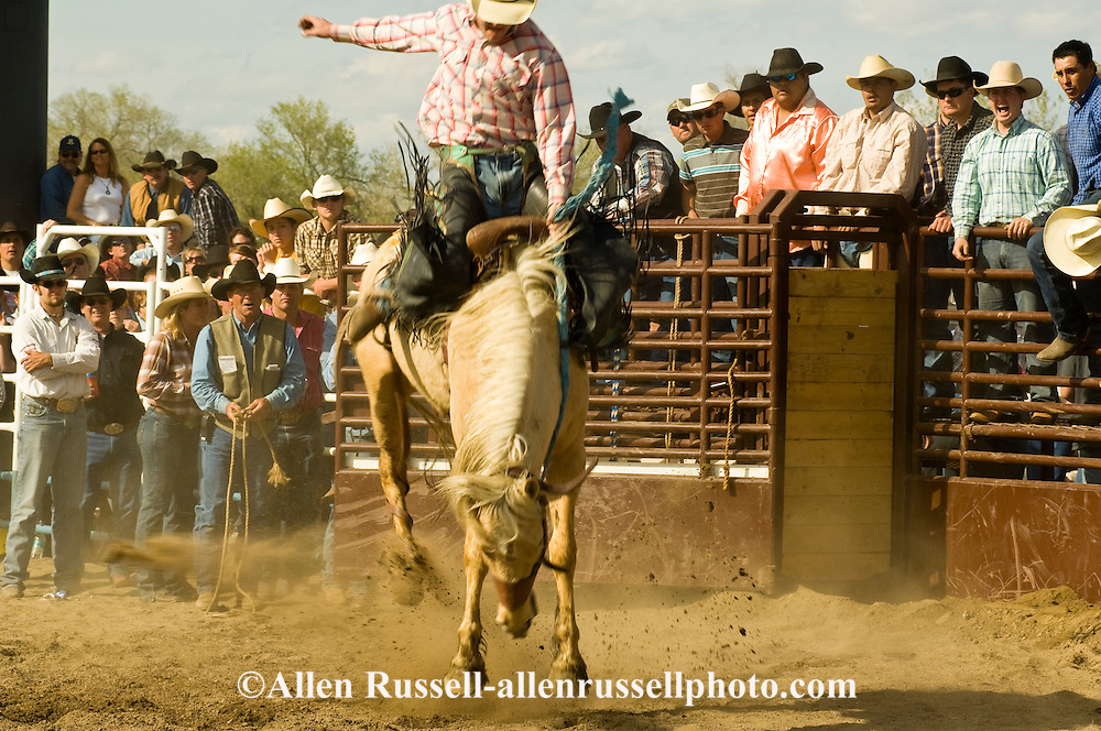 Rodeo, Saddle Bronc rider, Miles City Bucking Horse Sale, Montana
