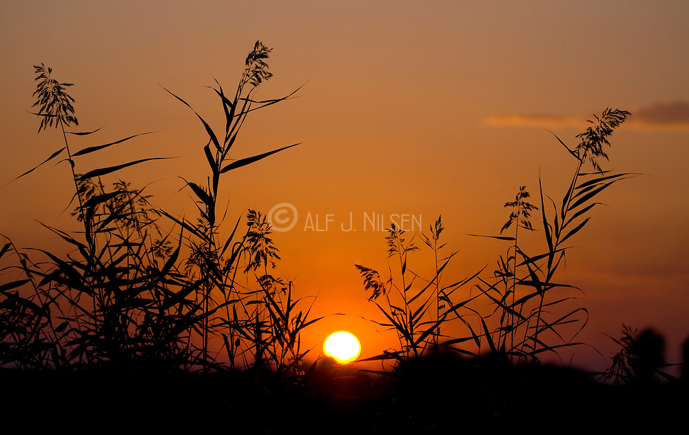 Sunset in Camargue, Provence, France.