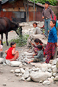 India, vashisht, Kullu District, Himachal Pradesh, Northern India, young children of about 8 years old at work at a stone quarry, breaking rocks into gravel with a hammer. a cow in the background is feeding
