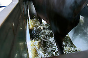 Switzerland, Uzwil, Health Balance clinic for animals....A horse having aquatraining therapy. The animal walks on a mobile..carpet inside an enormous tub, under the veterinarians' supervision,..who study every movement from nearby. The instrument allows the..quantity of water and the speed of the carpet to be regulated,..according to the animal's needs... The goldfish swims lazily between the fronds of fake seaweed, under the attentive gaze of the medical staff. ?When he came here he was moving all wrong. He swam crooked, he was almost upside-down,? explains Marisa Polanec, obviously enthusiastic at the result. For it appeared that the littlest in-patient at Health Balance, the Swiss clinic for animals, had been suffering from electrosmog poisoning. ..An unusual complaint, yes, but here, in the midst of the clinic?s futuristic architecture and the green hills of San Gallo canton, the concept of normality is done away with even before arriving at a diagnosis. That?s because, to identify the cause of the goldfish?s suffering, Urs Buehler ?kinesiologist and the centre?s founder, as well as the owner of an industrial colossus in the region ?simply asked it, by using his ever-present dowsing rod. .. The goldfish swims lazily between the fronds of fake seaweed, under the attentive gaze of the medical staff. ?When he came here he was moving all wrong. He swam crooked, he was almost upside-down,? explains Marisa Polanec, obviously enthusiastic at the result. For it appeared that the littlest in-patient at Health Balance, the Swiss clinic for animals, had been suffering from electrosmog poisoning. ..An unusual complaint, yes, but here, in the midst of the clinic?s futuristic architecture and the green hills of San Gallo canton, the concept of normality is done away with even before arriving at a diagnosis. That?s because, to identify the cause of the goldfish?s suffering, Urs Buehler ?kinesiologist and the centre?s founder, as well as the owner of an industrial colossus in t