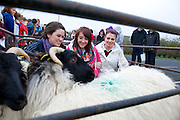Teagasc's Science Week  saw secondary schools from County Galway attend Teagasc Athenry.  Laura Cosgrave Nicola Coyne and Roisin Qualter, Presentation College Athenry with some of the sheep on display. Photo:Andrew Downes. Photo issued with compliments, no reproduction fee..