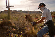 Tucson, Arizona, USA; February 8, 2014; Volunteers and staff at Saguaro National Park East remove buffelgrass, a non-native plant which threatens the Sonoran Desert, in Tucson, Arizona, USA.