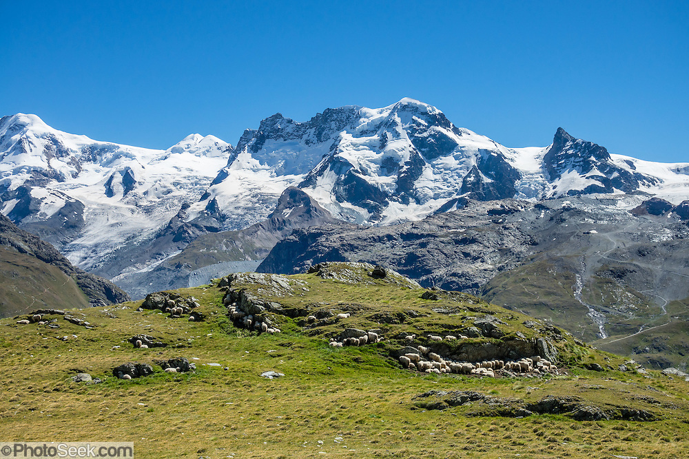 From Zermatt, hike the scenic Höhbalmen Höhenweg loop via Bergrestaurant Edelweiss, Trift Hut and Zmutt, in the Pennine Alps, Switzerland, Europe. With delightful views of the Matterhorn plus other peaks and glaciers, this strenuous walk went up and down 1200 meters over 21.6 km (13.4 miles).
