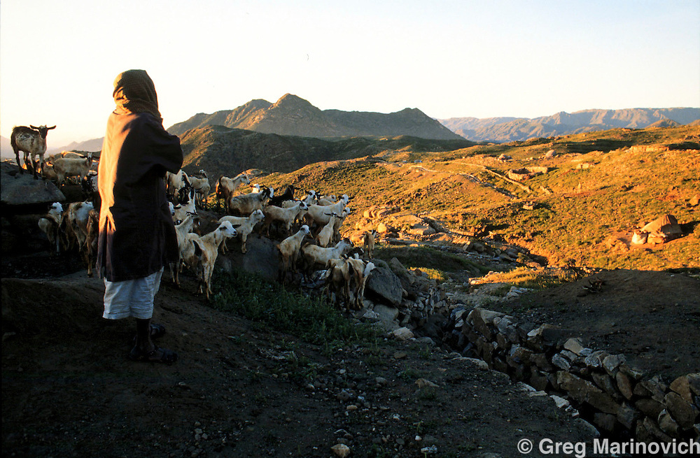An Eritrean man looks after his herd of goats above Nagfa town. 1997. Greg Marinovich.
