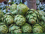 a pile of fresh raw Artichoke
