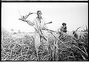 Muzzafargarh: 'Basti' people or 'Jhuggi Wallahs' work as contract workers collecting sugar cane for processing at the local sugar mill. ..Contract workers typically exchange votes in return for employment  on the massive sugar cane plantations or are leased portions of land where they can cultivate their own crops for processing at the sugar mills...Contract workers typically earn PRS100 ($1.00) per day, working from first light until dusk, cutting and collecting sugar cane.   ..They will never earn enough money to be able to afford to buy their own land and thus are consigned to a life of poverty in the region. An acre of land will typically yield a return of PRS15,000 per annum for the land owner..