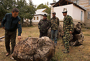 Poaching may be the biggest threat to the walnut forests, trees are cut for their burls and their trunks, both used in high end decorative furniture making.  Here a group of forestry rangers inspects pieces they've confiscated from local poachers.   The conservation efforts in this region include micro enterprise loans that encourage other economic alternatives.