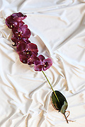 Purple Orchid Silk flower on white background