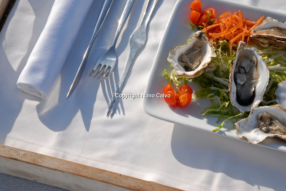 Tray with oysters on a bed, next to the sea