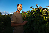 USA, Oregon, Corvallis, Oregon State University horticulture PhD student discusses his raspberry research, MR