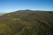 Kohala Forest Reserve, North Kohala, Big Island of Hawaii