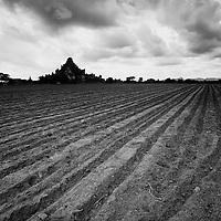 Plowed field at Bagan