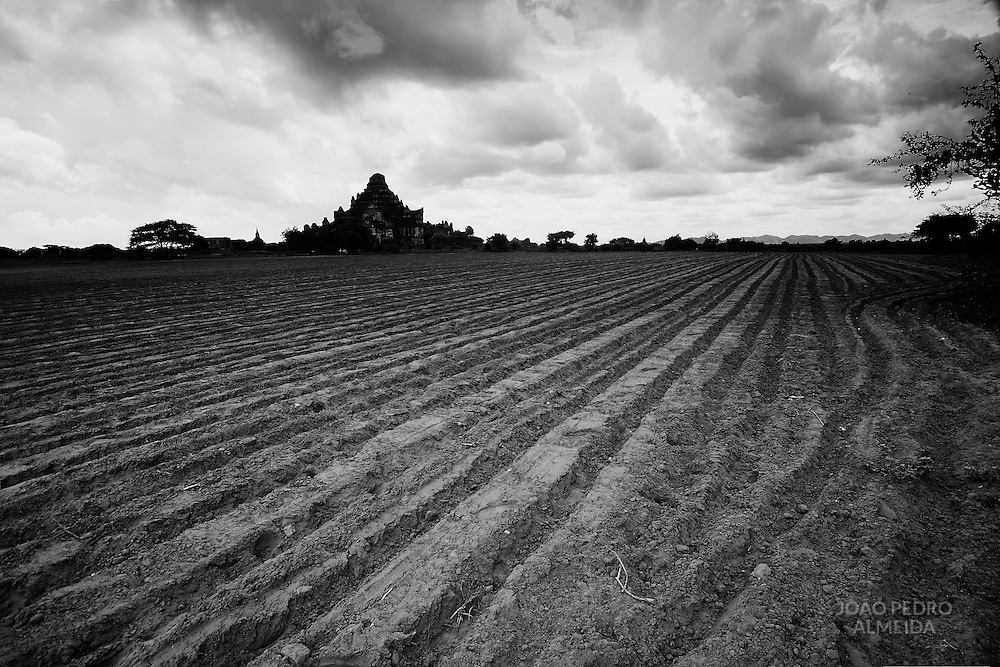 Plowed field at Bagan