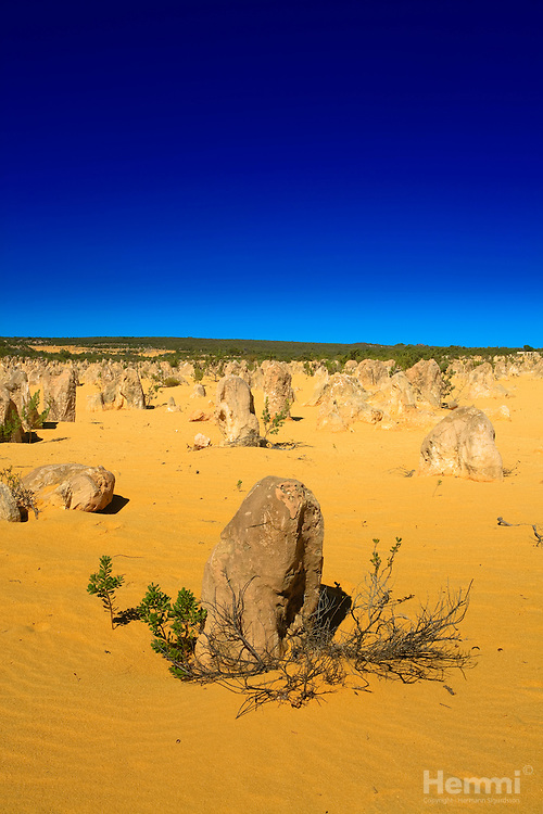 The Pinnacles are limestone formations contained within Nambung National Park, near the town of Cervantes, Western Australia. [source: wikipedia.org]