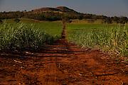 Uniao de Minas_MG, Brasil...Plantacao de cana em Uniao de Minas...The sugar cane agriculture in Uniao de Minas...Foto: LEO DRUMOND / NITRO