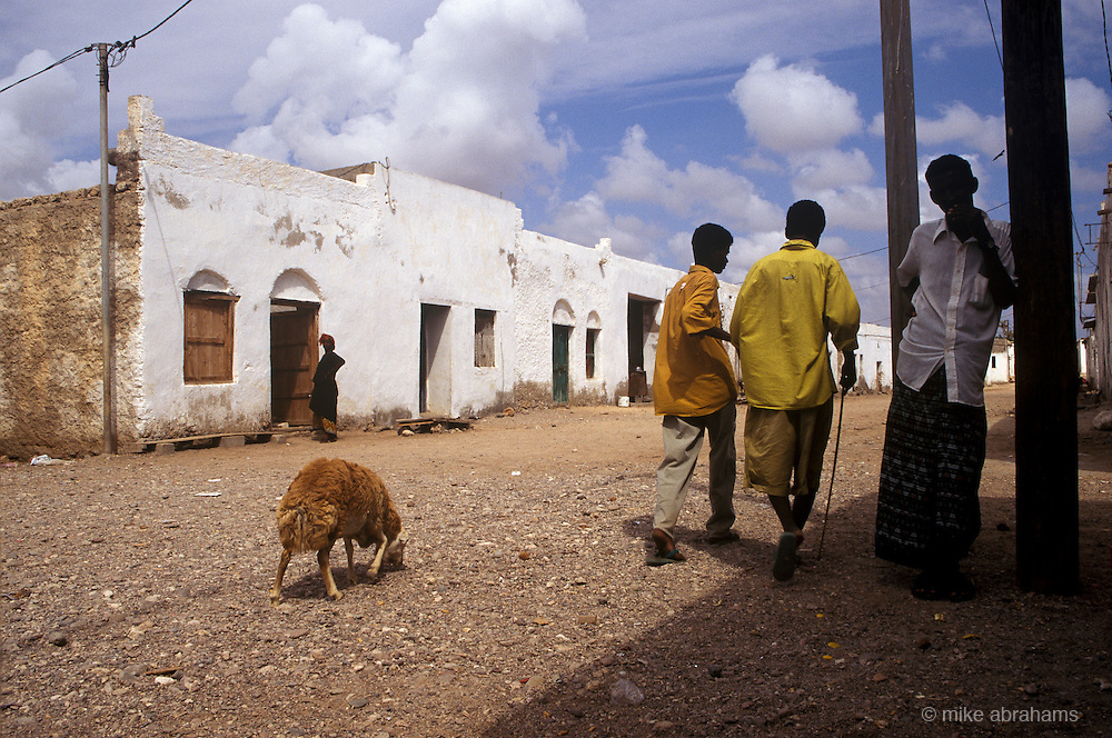 A sheep walking in the street in Obock, Republic of  Djibouti