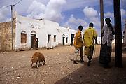 A sheep walking in the street in Obock, Republic of  Djibouti