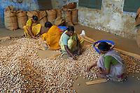 Inde, Etat du Kerala, Kochi ou Cochin, Fort Cochin le centre historique, quartier des epices, entrepot de noix de betel // India, Kerala State, Fort cochin or Kochi, spices area, worker in the betel nut warehouse