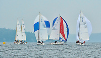 Winnipesaukee Yacht Club members approach the turn during their J80 race on Friday evening in Saunders Bay.   (Karen Bobotas/for the Laconia Daily Sun)