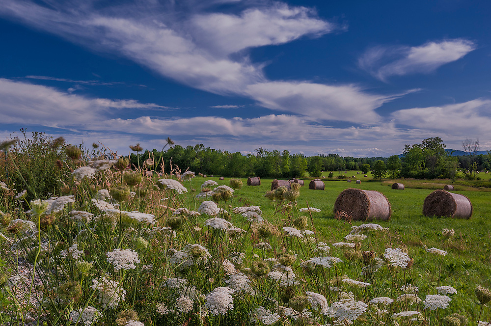 Round bales of hay in field with wildflowers in summer, Charlotte, VT