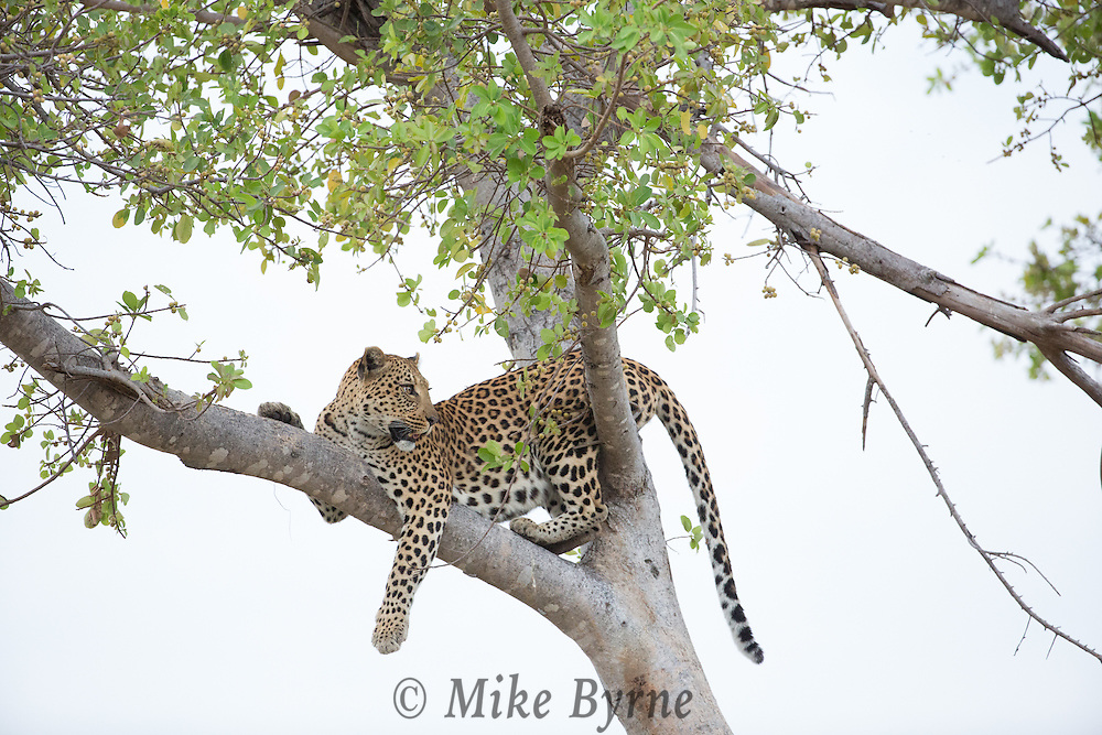 Photos taken during our 2014 Photo Safari to Botswana