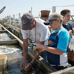 "August 4, 2017 - Tangier Island, VA - Tangier Island Mayor James ""Ooker"" Eskridge shows a young friend how to detect when the crabs are molting their shells to become soft shell crabs, which are shipped daily to restaurants up and down the Eastern seaboard.  The crab porcessing area is behind his crab shanty. Set on pilings hundreds of yards from shore, the little shacks, where watermen monitor crabs as they shed their hard shells to become soft-shells, are like Tangier itself: islands apart. Perched 12 miles from the Eastern Shore of Virginia, Tangier (about three miles long and 1 1/2 miles wide) is accessible only by boat or by plane; most visitors take the ferry. Boats outnumber cars, and almost everyone makes a living from the water.Photo by Susana Raab/Institute"