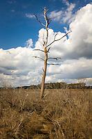 Tidal marsh, Chincoteague National Wildlife Refuge, Virginia, USA