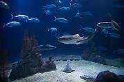 March 24, 2018; Omaha, NE, USA; Suzanne and Walter Scott Aquarium at Omaha's Henry Doorly Zoo and Aquarium.