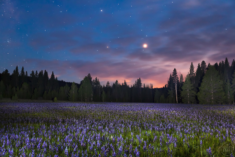 """Sagehen Meadow at Night 1"" - Photograph of the Camas wildflowers at Sagehen Meadows, near Truckee, California at night."